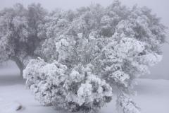 nevada015