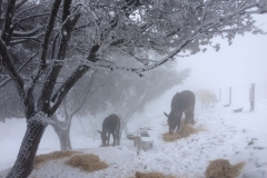 nevada017